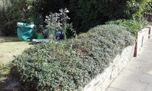 after hedge cutting and tidying by the landgirl