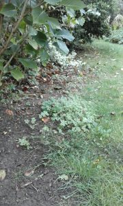 BEFORE: General weed tidying by The Landgirl